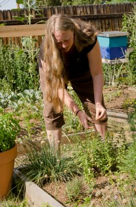 Sharona Thompson plucks weeds from an herb bed in her Ruby Hill garden July 17.  Photo by Melanie J. Rice • mrice20@msudenver.edu
